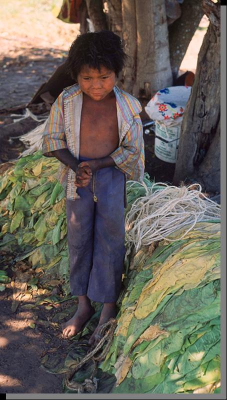 Los Cultivadores de Tabaco