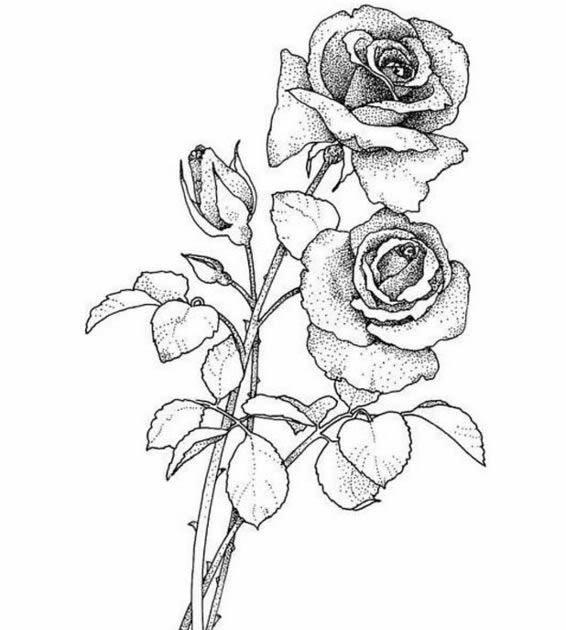 Lipby Blogs: Black Rise Tattoo Design