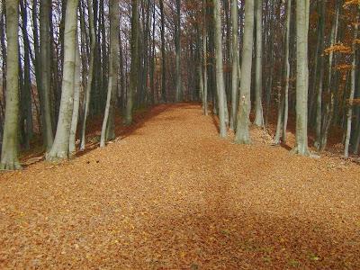 Idilična šumska staza