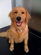 Boulder the Brand Dog