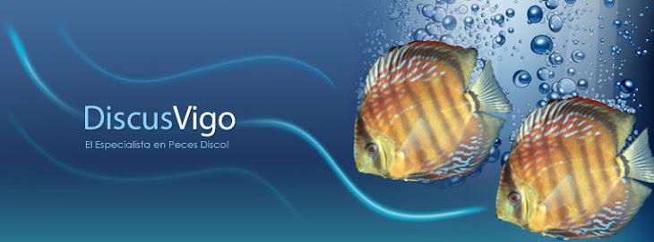 Discus Vigo