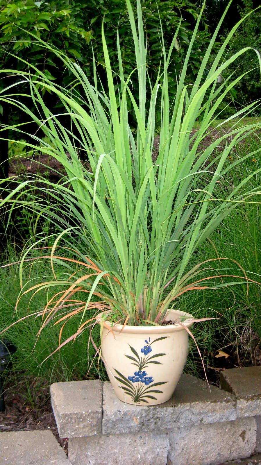 Logee's Tropical Plants Blog: Keep Your Tropical Plants ...