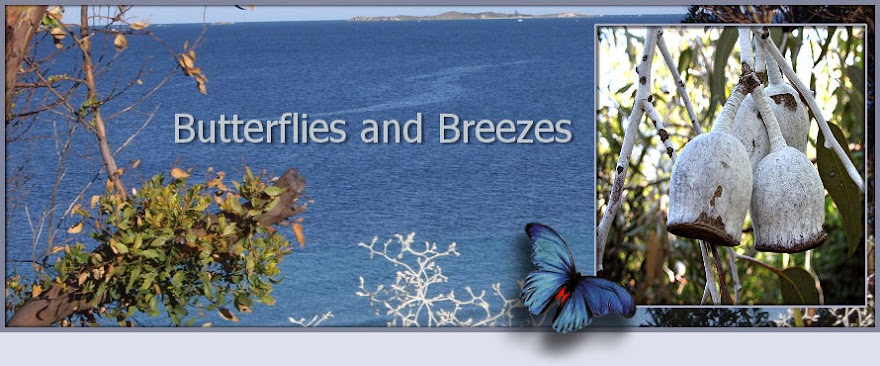 Butterflies and Breezes
