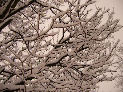 Snow at Last - Cause for More Celebration in Bulgaria