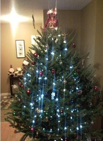 How Much Does Your Christmas Tree Really Cost? ~ Jessie's ...