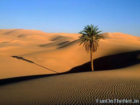 deserts-03.jpg