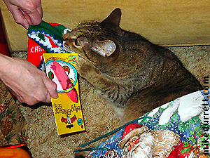 Christmas with Santa Cat