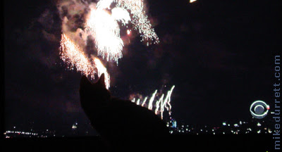 Morty the cat experiences July 4th Independence Day fireworks.