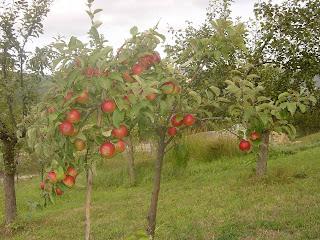 Trucos para el jardin arboles frutales en t jard n plantas for Arboles frutales para el jardin