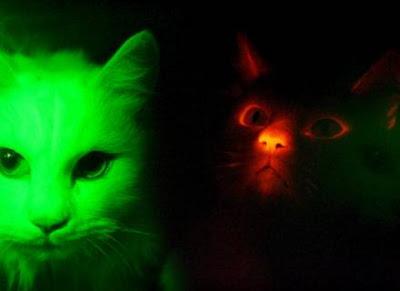 Gato no Escuro