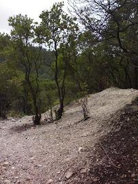 Hutan Kawah Putih