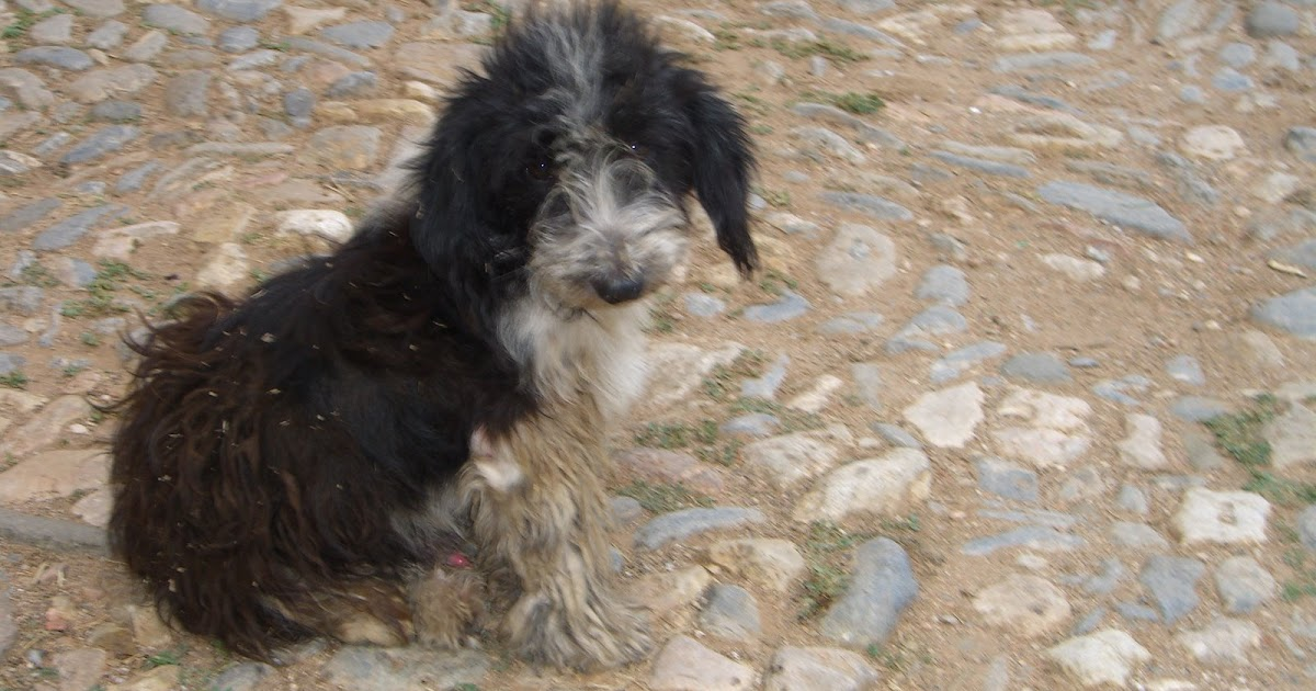 Shaggy Dog Rescue Twitter