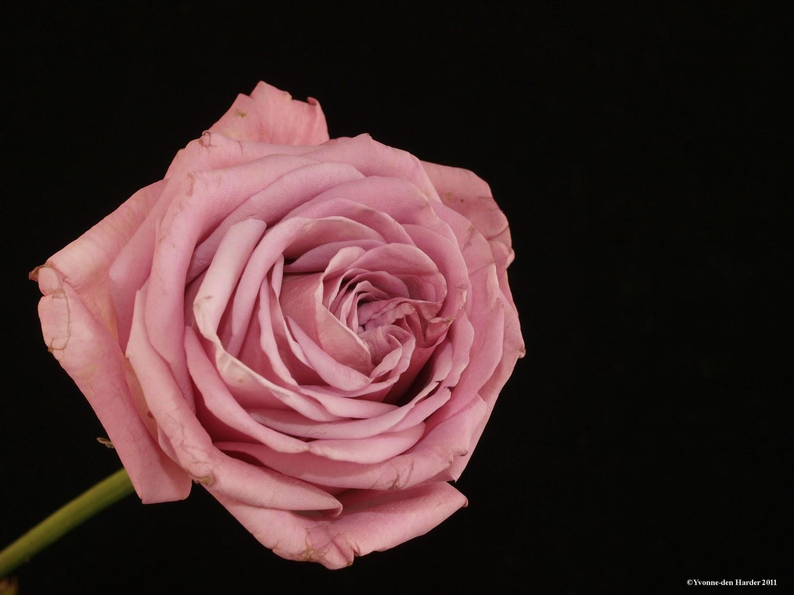 Geliefde Yvonne's foto blog: mooie bloemen &VR88