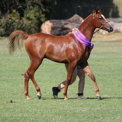 My Favorite Things: The Basic Horse Colors - photo#6