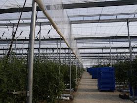 Goliraya Invernadero con Estructura de Acero S/ólido y Duradero
