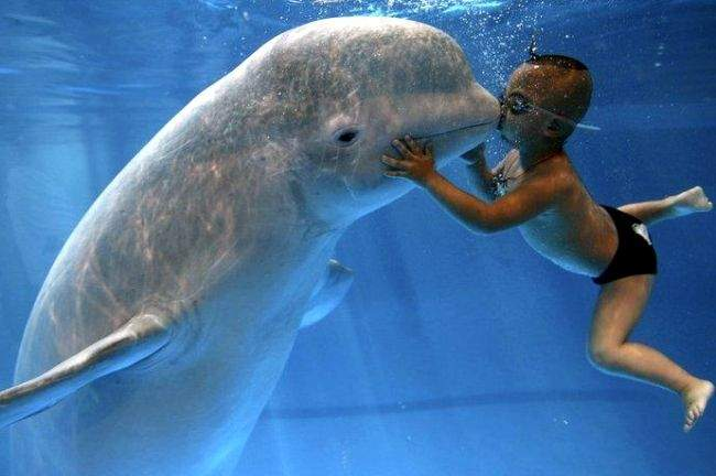 The Boy with Beluga Whale