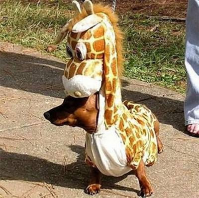 funny cats and dogs pics. funny-cats: dogs dress up 2