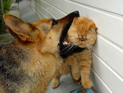 [dog_eating_cat.jpg]