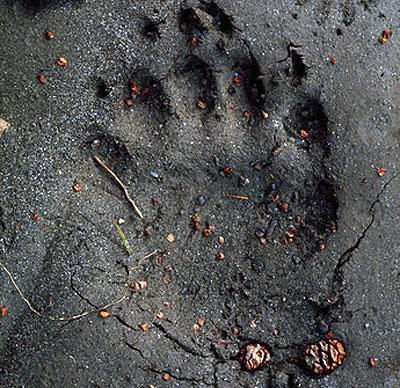 Monsters Mysteries Breaking News Unknown Footprint Found In Woods