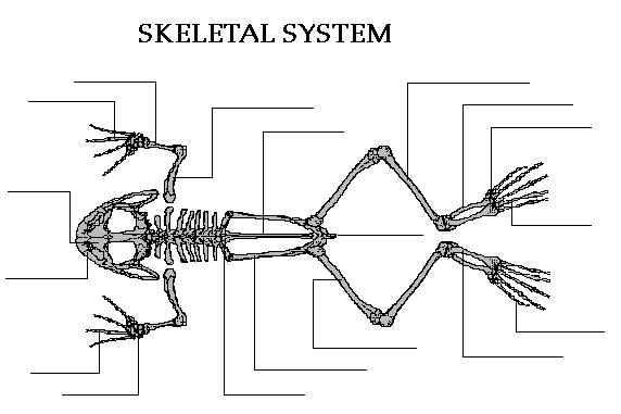 Webb's Blog: Image references for Frogman