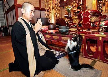 anjing unik dari jepang