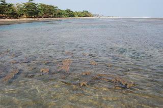 Pantai Minajaya di Surade