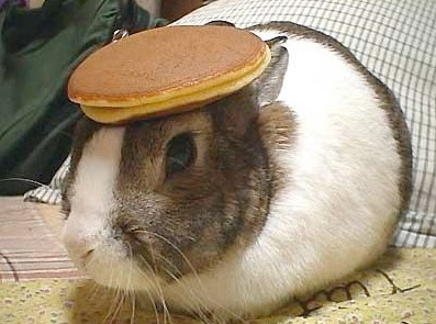 Nothing Funnier Than A Bunny With FlapJacks on Its Head