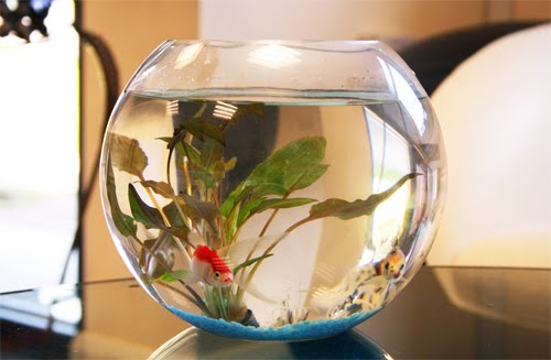 fish for office. Our Fish Bowl For Office