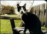 Socks the cat, White House Photo.