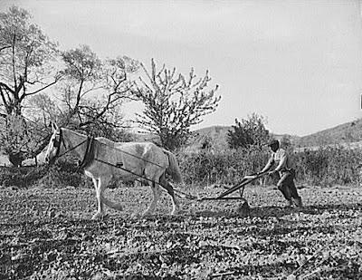 Negro farmer plowing his field of four acres