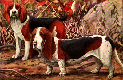 The Beagle and Basset Hound