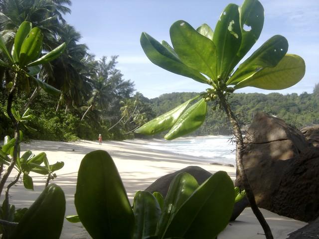 Anse Takamaka Mahe Seychelles