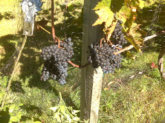 Villa Ruzzo Vineyards