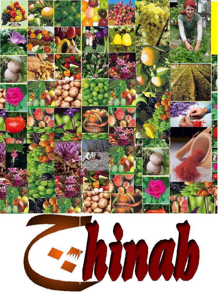 NGO's in India: Scientific Cultivation of Saffron in ... Kashmiri Saffron Corms For Sale