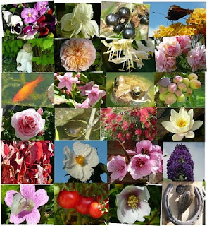 Writer-South Asia: Maca-Lepidium meyenii seeds available ... Kashmiri Saffron Corms For Sale