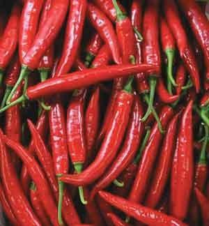 Chenab Industries Kashmir (CIK): Chilli seeds Hot Kashmiri ... Kashmiri Saffron Corms For Sale