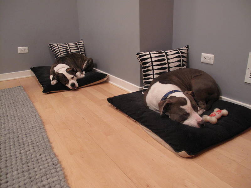 Twin Dog Beds