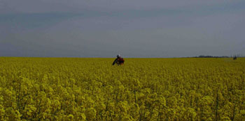 Riding in a rape field