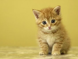 Una de gatos. Para Esther.