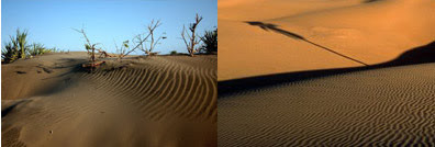 Gunung Pasir Parangkusumo dengan gurun Sahara