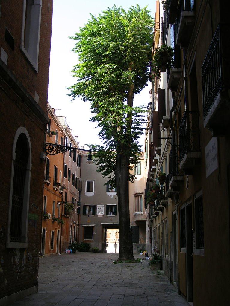 venezia: il leone marciano nella corte del duca sforza