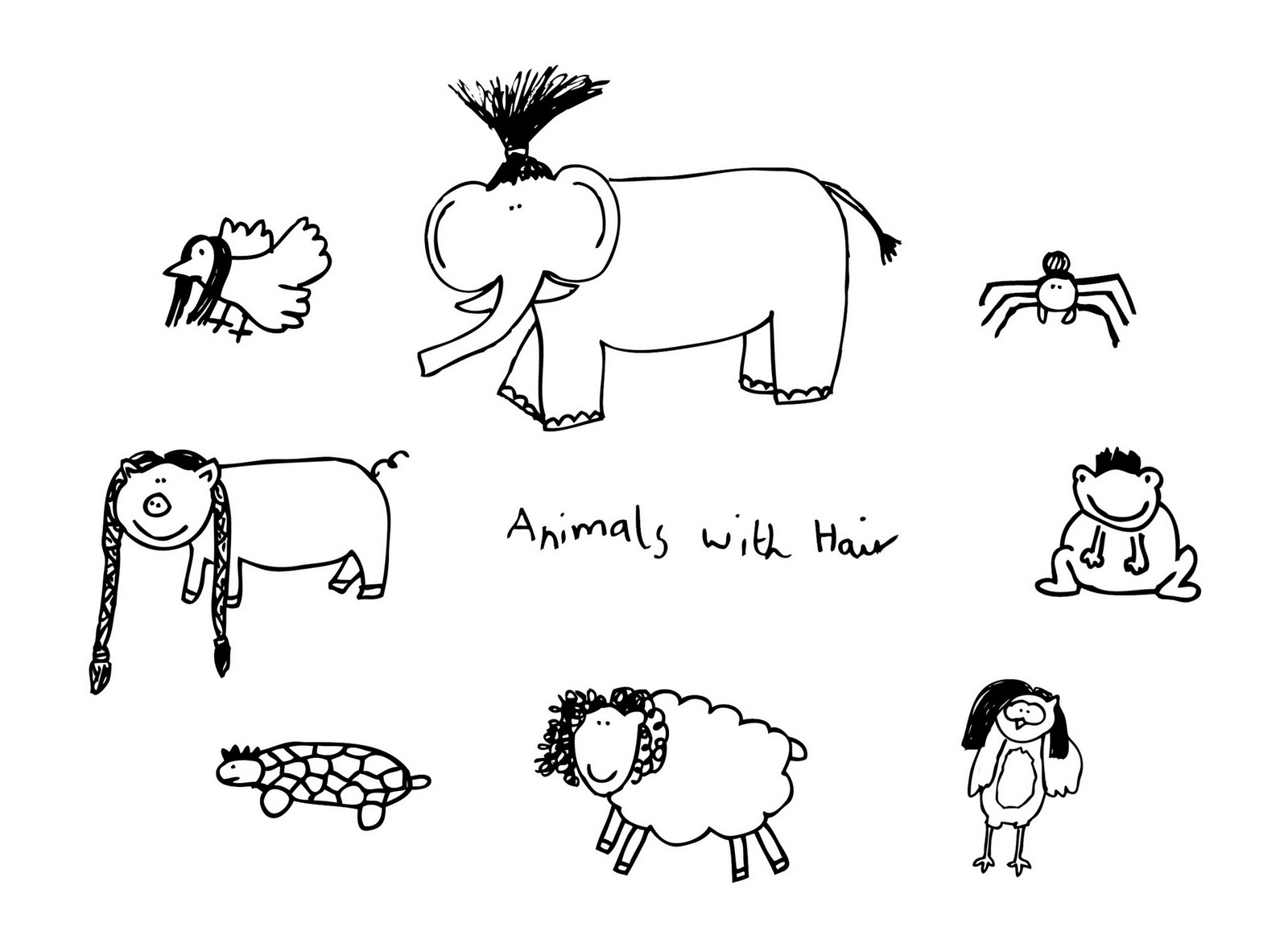 Animals With Hair