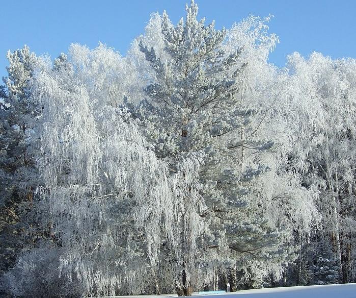the winter in Belarus