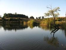 Laguna de Talcamávida