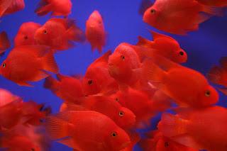 Aninimal Book: All Aquarium Fish