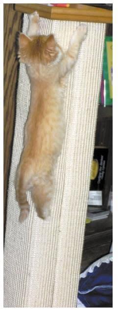 Anekakucing Cara Memotong Kuku Kucing Kesayangan Anda Dilengkapi Dengan Foto