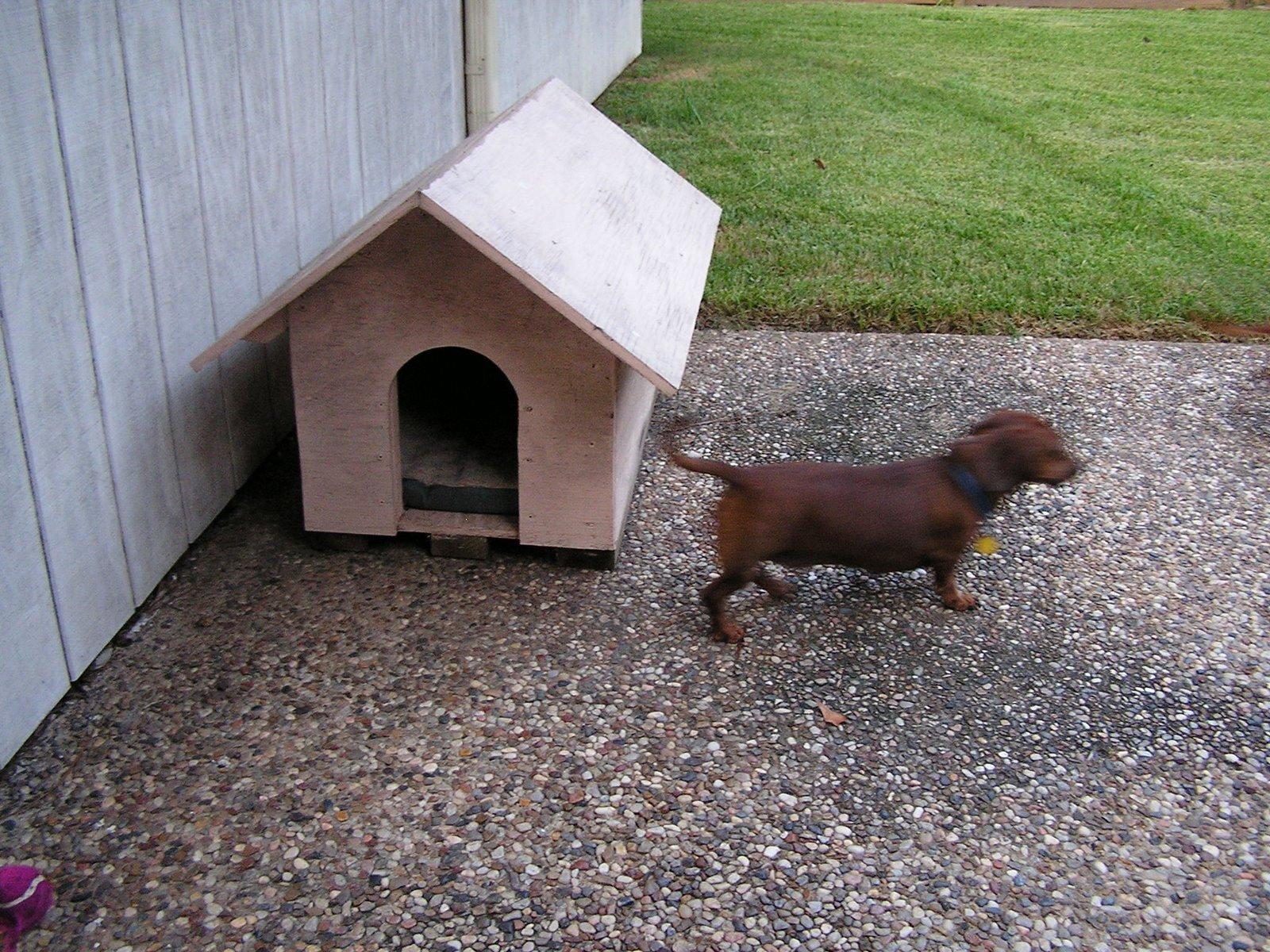 [Doghouse3.JPG]