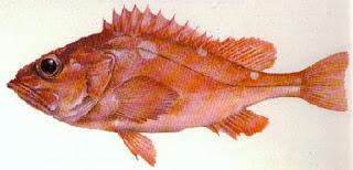 05 m 8-35 g GAMAKATSU trucha Cañas pesca Cañas pesca trucha de mar Akilas 100 3