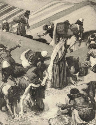 Gathering manna - by James Tissot