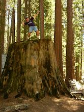 Adam on a Tree Stump in Yosemite